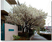 順天堂大学医療看護学部 4回生