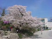 飯田市立伊賀良小学校