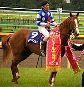 ディープスカイ(競馬)