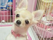 2011年2月10日生まれの愛犬
