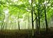 日本で木を植えたい。間伐したい