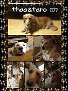 世界で一番の宝物feat愛犬家