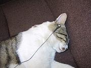 寝るときはイヤホン装備