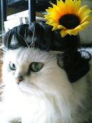 Cute&lovely高齢・老齢猫
