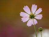 自然写真 「NaturePhoto」