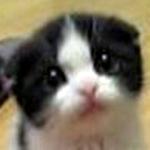 LOVE丸顔猫