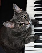 ピアノソナタが好き!