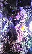 珊瑚 海水魚