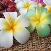 ハワイアンカルチャー 大好き