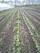 小畑農園の有機野菜