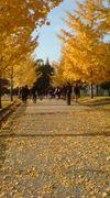 神奈川大学附属 18期生