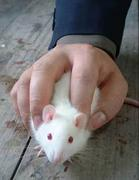 マウスをドラッグすると声が出る