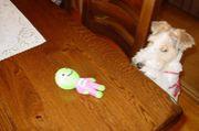 ペットの玩具