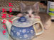 喫茶キャロル