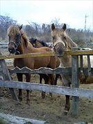 馬とバイクの共存を考える