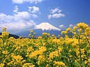 富士、富士宮の趣味交流の集い