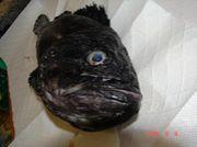 北海道の釣り(奥尻島編)