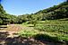 SYOKU-YABO農園へようこそ!
