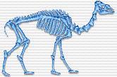 CamelBones