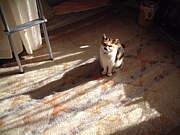 TOPの写真が猫!