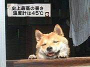 夏バテええぇ\(^o^)/