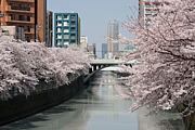 東京散歩の会