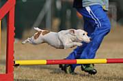 四国のドッグスポーツ