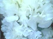 花の仕事 + 花屋経営