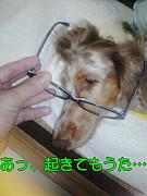 メガネ&スイーツの会、時々犬。