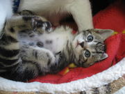 ゴマ猫の乳児院兼保育所開設