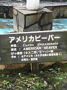 宮城仙台を大いに楽しむための団