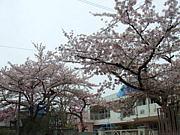京都・桃林(とうりん)幼稚園