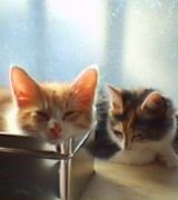 室内飼い猫☆集まれ〜!にゃ〜☆
