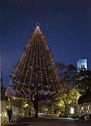 同志社大学クリスマスツリー