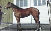 レジュールダムール(競走馬)