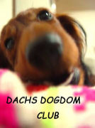 DACHS DOGDOM CLUB