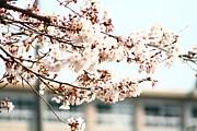 武義高 03年卒