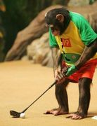 猿ゴルファーの集い