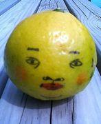 ニューサマー オレンジれんじ