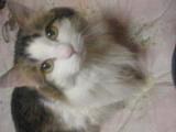 猫が好き〜(^O^)