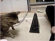 猫にメトロノームを止められた
