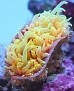 遊 珊瑚倶楽部