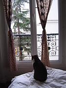 フランスで猫と暮らす