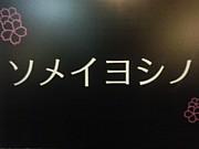 ソメイヨシノ目安箱
