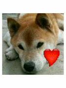 ♡天使になった愛犬♡