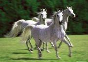 白馬の棋士(暫定)