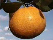 オレンジの会 〜青春〜