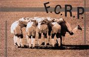 F.C.R.P.