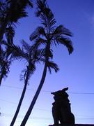 沖縄に移住したないちゃー