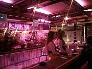 国分寺 Pink Buffalo
